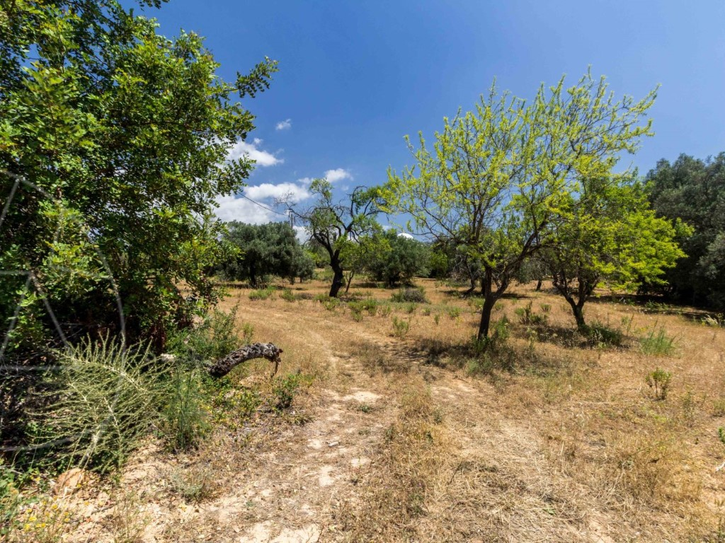 Rural Land for sale in Loule sma8992